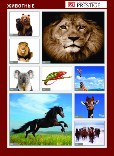 изображений для фотопечати на натяжном потолке - животные №3