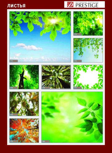 изображений для фотопечати на натяжном потолке - деревья и листья №1