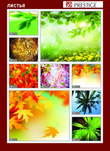 изображений для фотопечати на натяжном потолке - деревья и листья №2