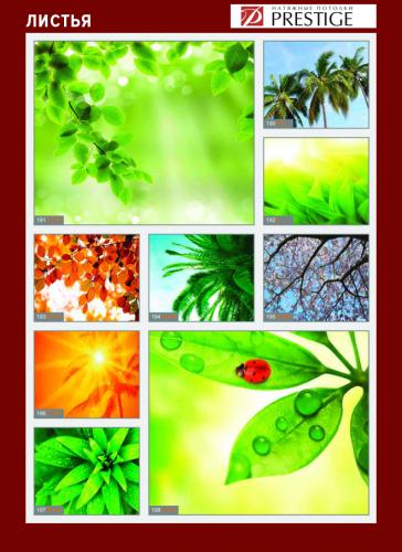 изображений для фотопечати на натяжном потолке - деревья и листья №3