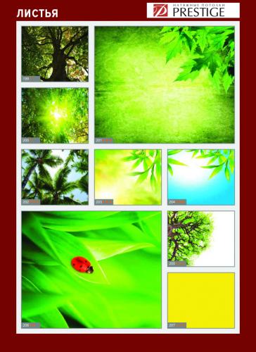 изображений для фотопечати на натяжном потолке - деревья и листья №4