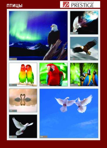 изображений для фотопечати на натяжном потолке - птицы №1