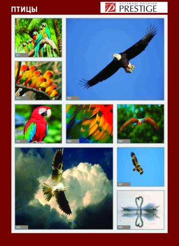 изображений для фотопечати на натяжном потолке - птицы №2
