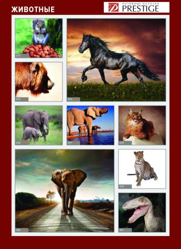 изображений для фотопечати на натяжном потолке - животные №1